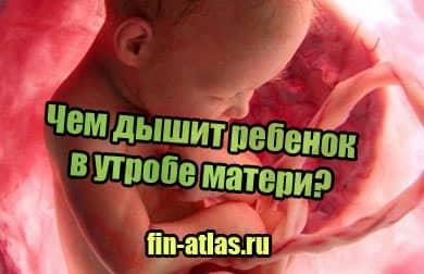 фото Чем дышит ребенок в утробе матери