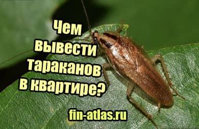 картинка Чем вывести тараканов в квартире