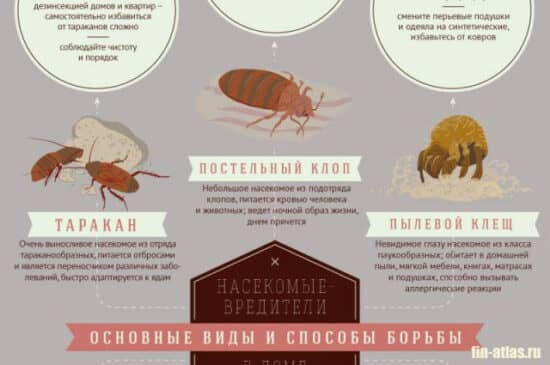 картинка насекомые вредители
