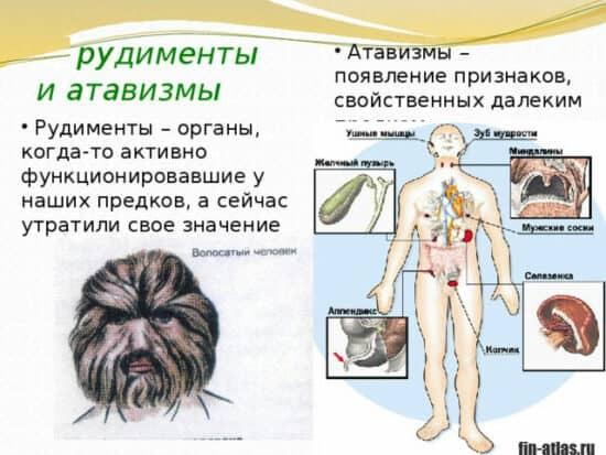 инфографика Рудименты